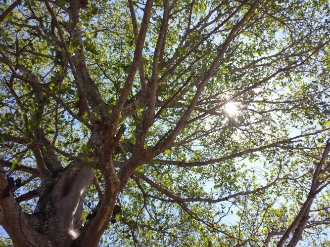 kendall sunlight